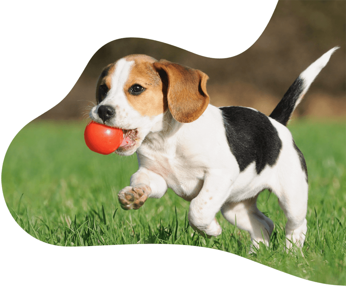 http://pawsitive.bold-themes.com/buddy/wp-content/uploads/sites/2/2019/07/hero_image_01.png