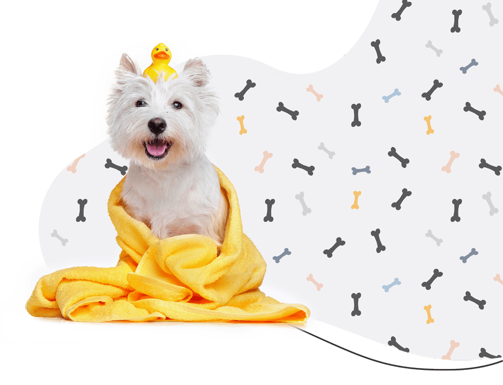 http://pawsitive.bold-themes.com/coco/wp-content/uploads/sites/3/2019/08/hero_prices.png